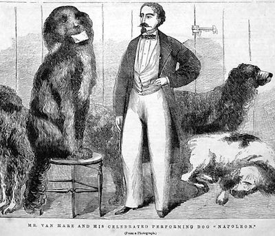 Newfoundland,George Van Hare, Napoleon,circus
