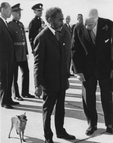 Haile Selassie,chihuahua,Great Dane