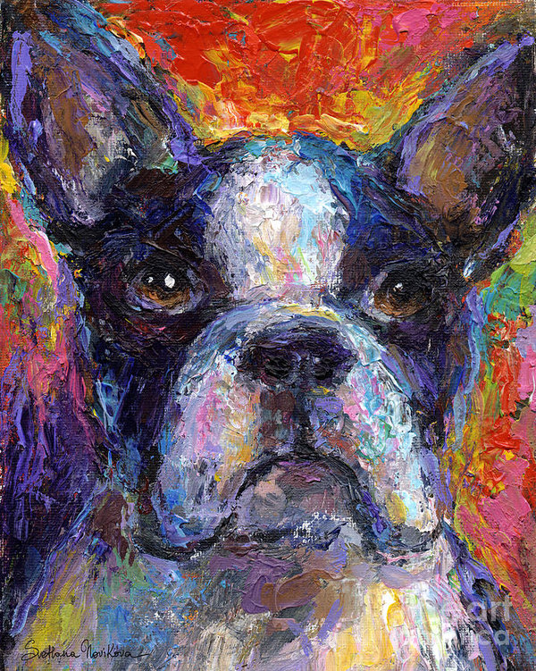 Boston Terrier, head, standard