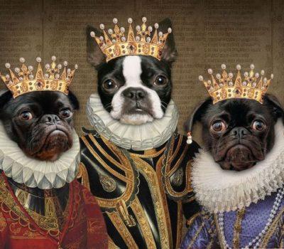 Greyhound, Laws,Scottish Deerhound, Shih Tzu, Sumptuary Laws, Bloodhounds, Japanese Chin, Pharaoh Hounds, Coton de Tulear