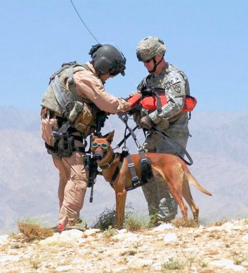 Doggles, Border Collie, Military dogs, police dogs