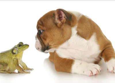 frog, Rottweiler,Bulldog, French Bulldog,term, nickname, Queen Elizabeth I,sploot