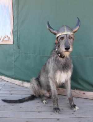 Irish Wolfhound,Viking,movie,13th warrior