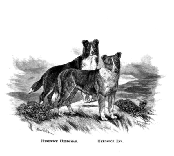 Collie,Trefoil,H. E. Packwood,Rawdon B. Lee