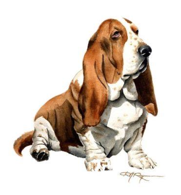 Cyrano of Dogs, Basset Hound,