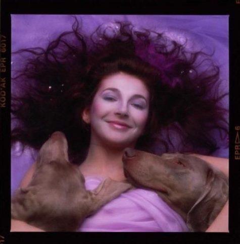 "Weimaraner,album cover, music, Kate Bush,The ""Hounds of Love"""