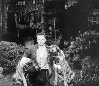 Irish Wolfhound,Sting,Trudie Styler,Dukesarum