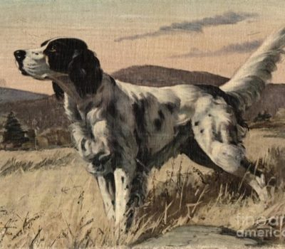 English Setter, History,Richard Purcell Llewellin,Edward Laverack