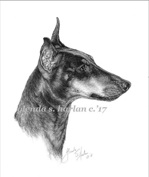 Manchester Terrier, Black and Tan Terrier, Black and Tan Manchester, John Hulme, Gentleman's Terrier,Rev. Wm. B. Daniel,Sydenham Edwards,Stonehenge,Skye Terrier