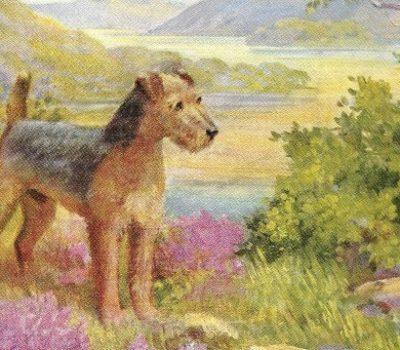 Lakeland Terrier,muzzle, jaws