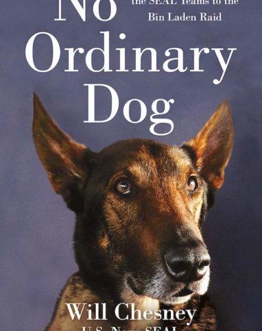 Belgian Malinois, Cairo,Will Chesney,Seal Team Six, Osama bin Laden,war dog,military dog