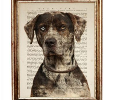 Catahoula Leopard Dog, Catahoula Cur, lines, T. A. McMillin,Lovie Fairbanks,Preston Wright