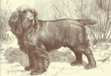 Augustus Elliot Fuller, giving tongue, giving voice, Sussex Spaniel