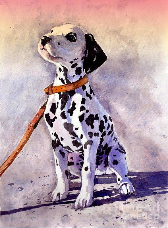 Dalmatian,spotting,doral spot, sliding spot, ticking, genetics