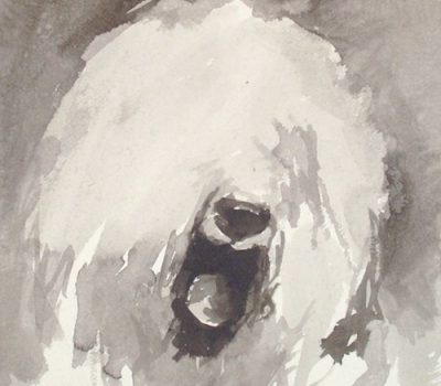 Old English Sheepdog,Shepherd's Dog, Smithfield Dog, bobtail