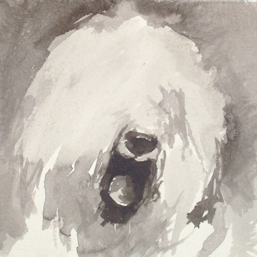 Old English Sheepdog,Shepherd's Dog, Smithfield Dog, bobtail