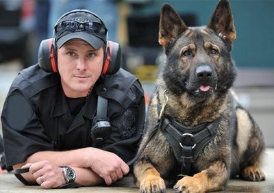German Shepherd Dog,police dogs,Royal Canadian Mounted Police,Black Lux,Dale of Cawsalta,Sultan