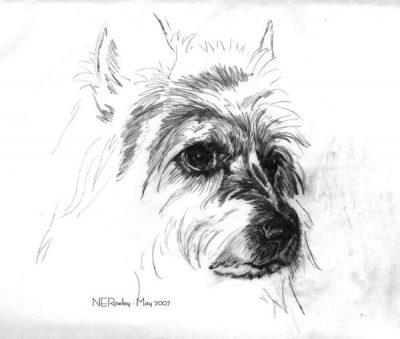Australian Terrier,broken-coated terrier,