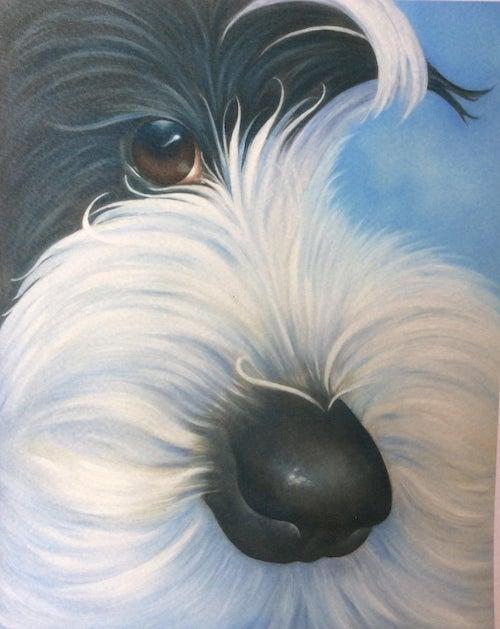 Apso,Tibetan Terrier,Dhoki Apso,Tsang Apso, Lhasa Apso,terms