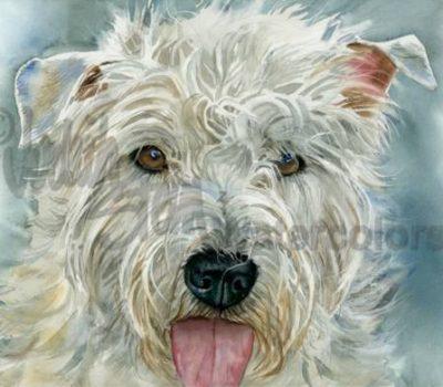 Glen of Imaal Terrier,dwarf,achondroplasia
