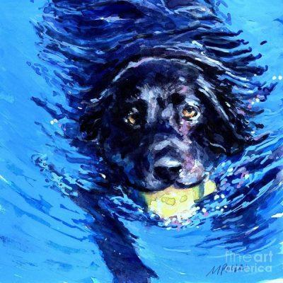 Labrador Retriever, Cao de Castro Laboreiro, Newfoundland,St. John's Water Dog,Earl of Malmesbury