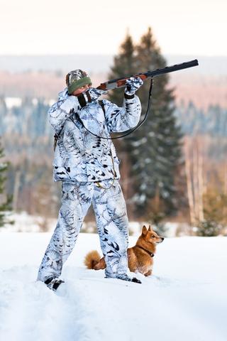 Finkie, Finnish Spitz,hunting,barking,Capercaillie