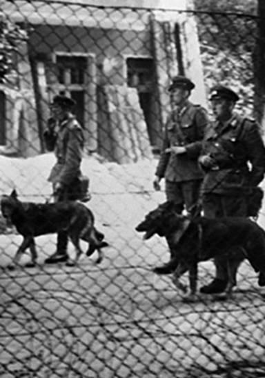 DDR German Shepherd, German Shepherd Dog, GSD,