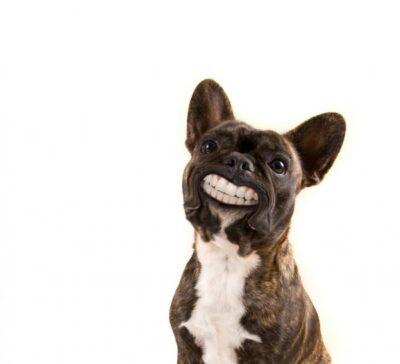 dentition, standard, teeth, 42