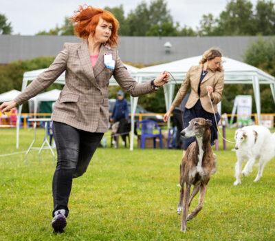 standard, loose lead, dog show, handler,