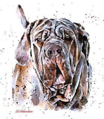 skin, type, Neapolitan mastiff