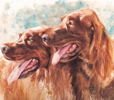 dual champion, Irish Setter, Hunting