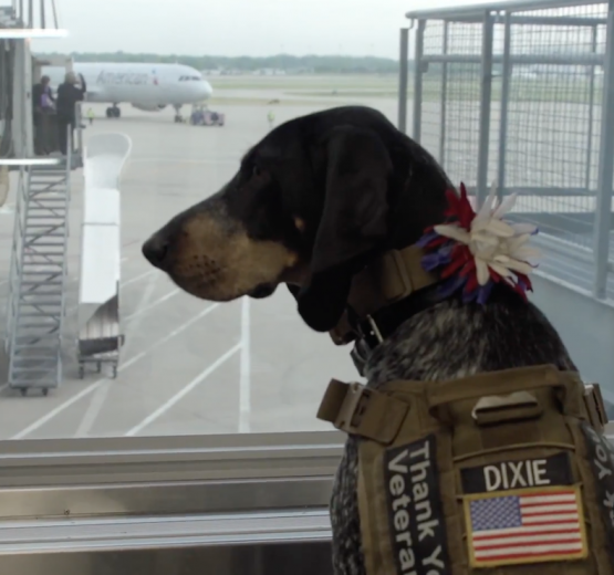 Bluetick Coonhound, Dixie the praying dog, therapy dog, hunting dog, film,
