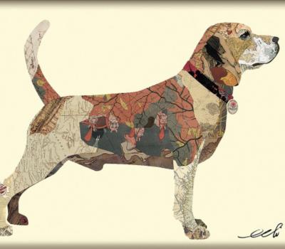Beagle, merle, coloring, blue,