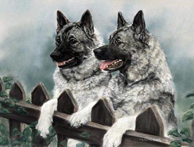Norwegian Elkhound,name