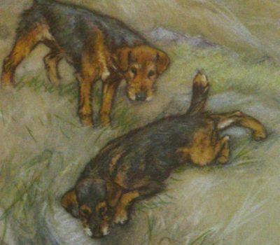 Lakeland Terrier, fells, fell terrier