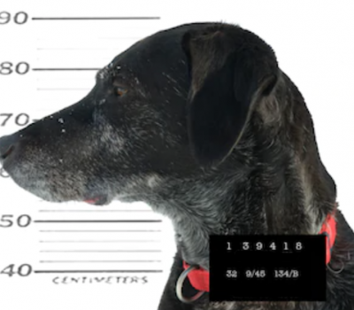 Labrador Retriever,Pep,Cornelia Bryce-Pinchot, therapy dog, Eastern State Penitentiary, prison,
