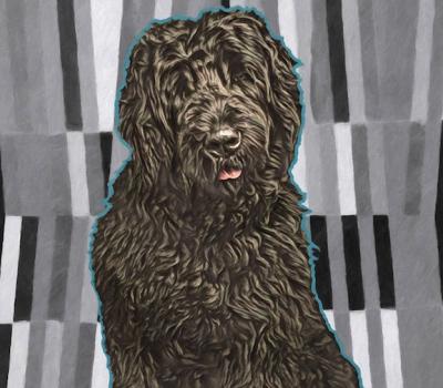 Black Russian Terrier,history,