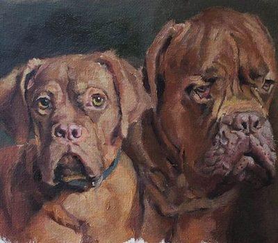Dogue de Bordeaux, wrinkles, standards, head