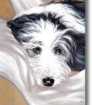 Bearded Collie, Hairy Mou'ed Collie