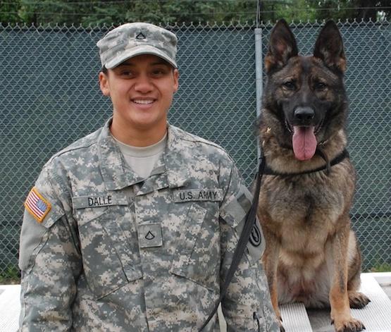 Army german shepherd dog