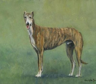 Greyhound, color, marking, brindle,