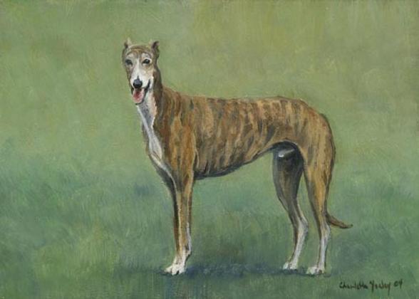Greyhound, color, marking, brindle,