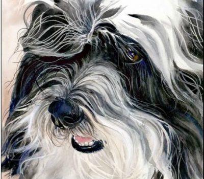 Havana Silk Dog, Havanese,