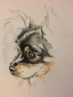 Chihuahua, coat, genetics, Manzanita, James Watson