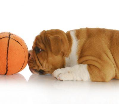 Bulldog, mascot,March Madness, basketball, Gonzaga, Georgetown