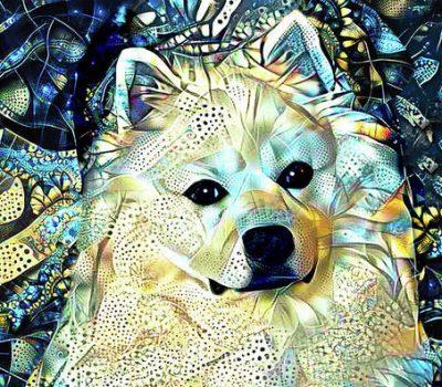 American Eskimo Dog,American Spitz,name, history