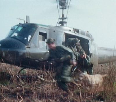 War dogs, tracking, Labrador Retrievers, Vietnam, Robby's Law
