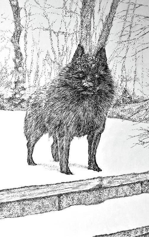 name, Schipperke, pronunciation,Felix Verbanck