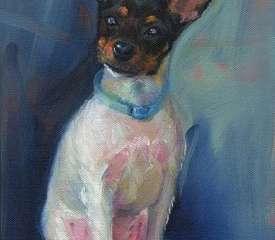 Toy Fox Terrier, history