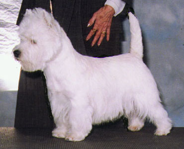 carrot tail, term, tail, terrier